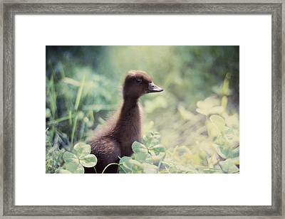 Sweet As Clover Framed Print by Amy Tyler