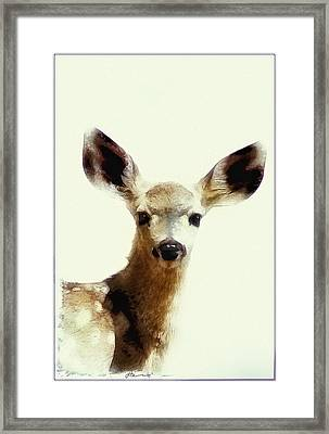 Sweet Baby Face Framed Print by Lynn Andrews