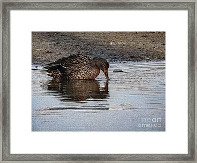 Sweet Duck Kissing Reflection Framed Print by Brenda Landdeck