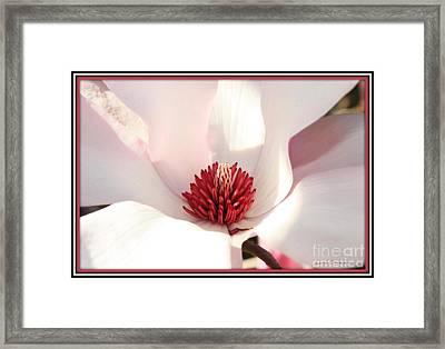 Sweet Magnolia Framed Print by Carol Groenen