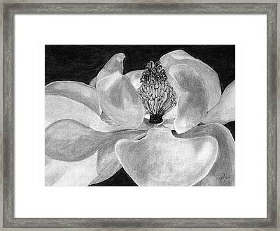 Sweet Magnolia Framed Print by Christina Steward