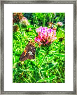 Sweet Nectar  Framed Print by Jame Hayes