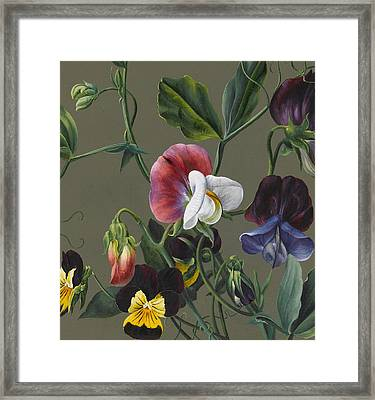 Sweet Peas And Violas Framed Print by Louise D'Orleans