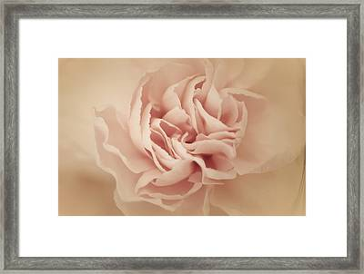 Sweet Perfection Framed Print by The Art Of Marilyn Ridoutt-Greene