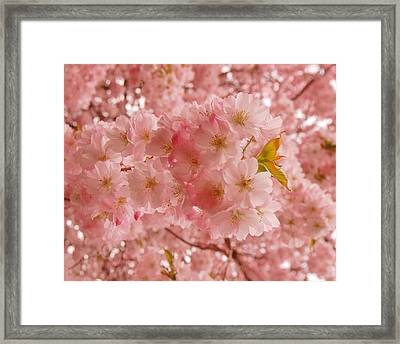 Sweet Pink- Holmdel Park Framed Print by Angie Tirado