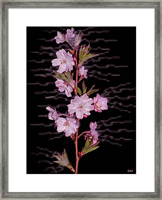 Sweet Smell Of Spring Framed Print by Debra     Vatalaro
