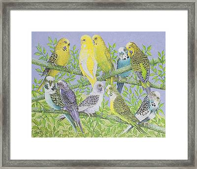 Sweet Talking Framed Print by Pat Scott