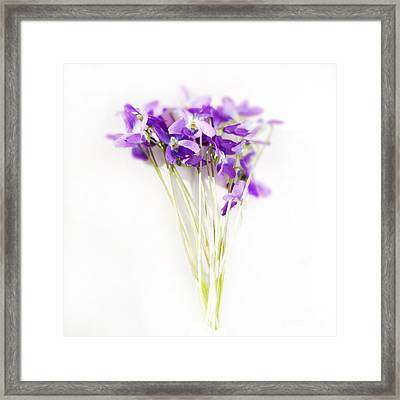 Sweet Violets Framed Print by Linde Townsend
