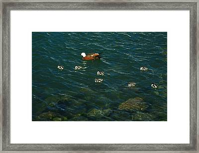Swimming Lessons 2 Framed Print by Terry Perham