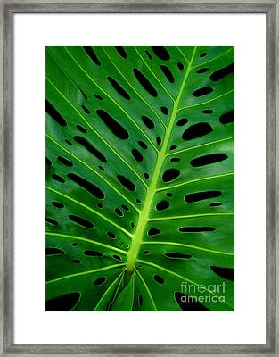 Swiss Cheese Plant Framed Print by James Temple