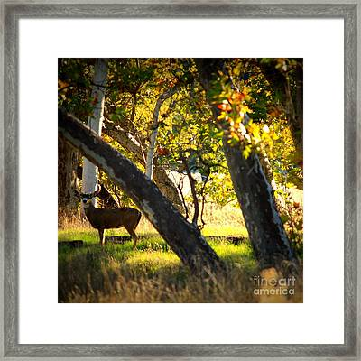 Sycamore Grove Series 1 Framed Print by Carol Groenen
