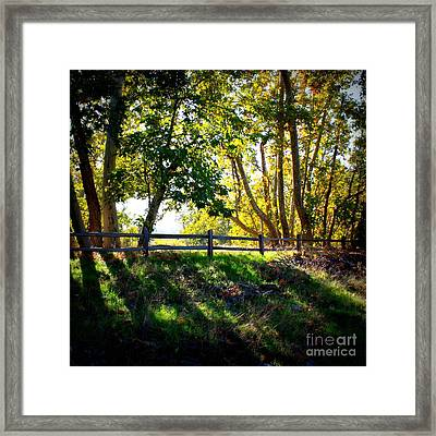 Sycamore Grove Series 12 Framed Print by Carol Groenen