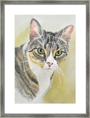 Tabby Cat With Gray, Black.orange Framed Print by Phyllis Tarlow