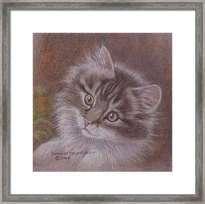 Tabby Kitten Framed Print by Dorothy Coatsworth