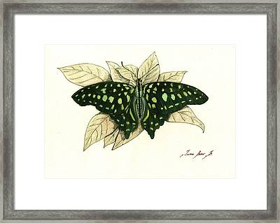 Tailed Jay Butterfly Framed Print by Juan Bosco