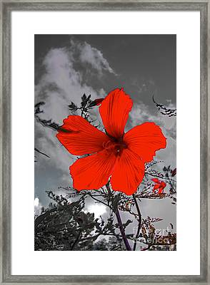 Take A Stand Framed Print by Robert Pearson