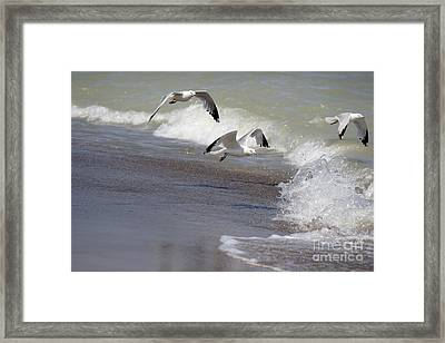 Take Flight Framed Print by Jeannie Burleson