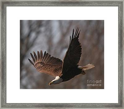 Taking Aim On Lunch Framed Print by Robert Pearson