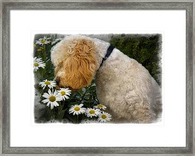 Taking Time To Smell The Flowers Framed Print by Susan Candelario
