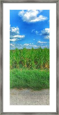 Tall Corn Framed Print by Jame Hayes