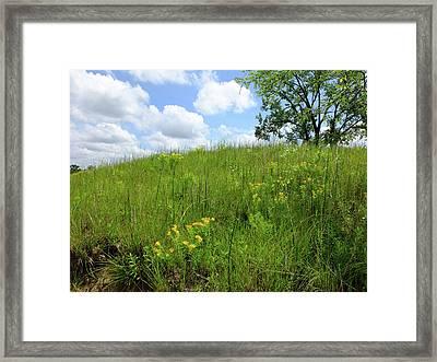 Tall Grass Hillside Framed Print by Scott Kingery