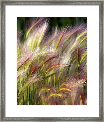 Tall Grass Framed Print by Marty Koch