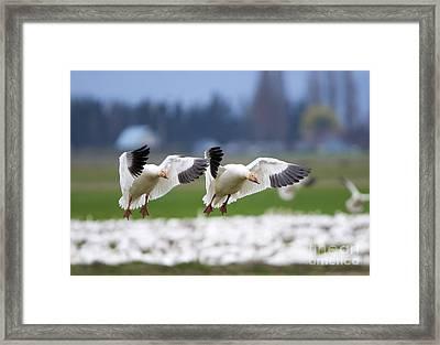 Tandem Landing  Framed Print by Mike Dawson