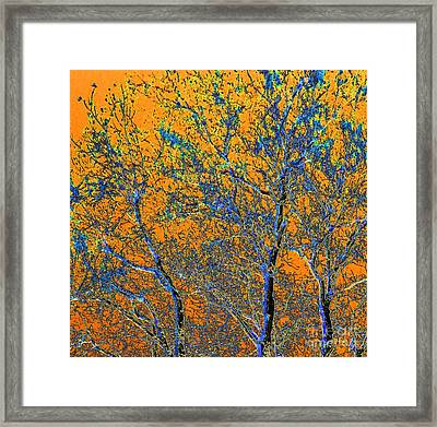 Tangerine Light Framed Print by Ann Johndro-Collins