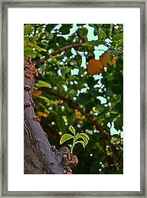 Tangerine Tree. Framed Print by Andy Za