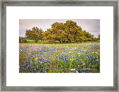 Tapestry Of Wildflowers At Willow City Loop - Texas Hill Country Framed Print by Silvio Ligutti