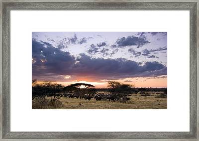 Tarangire Sunset Framed Print by Adam Romanowicz