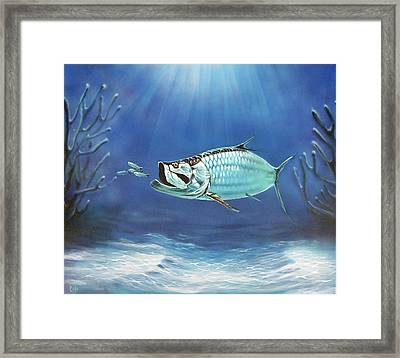 Tarpon Framed Print by Larry Cole