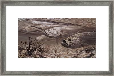 Tarpon Rustica Framed Print by Adrian E Gray