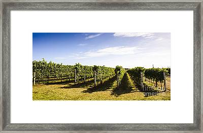 Tasmania Winery Landscape Framed Print by Jorgo Photography - Wall Art Gallery