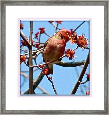 Taste Of Spring Framed Print by Debra     Vatalaro