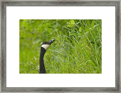 Tasty Morsel Framed Print by Sharon Talson
