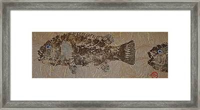 Tautog - Grouper - Wrasse Framed Print by Jeffrey Canha