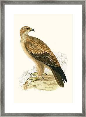 Tawny Eagle Framed Print by English School