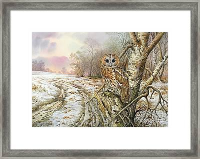 Tawny Owl Framed Print by Carl Donner