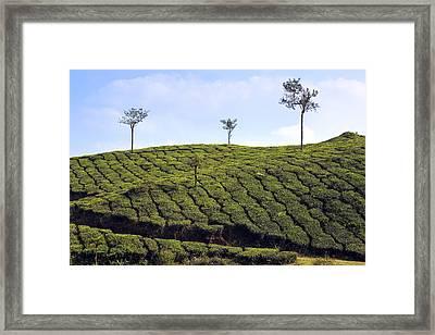 Tea Planation In Kerala - India Framed Print by Joana Kruse