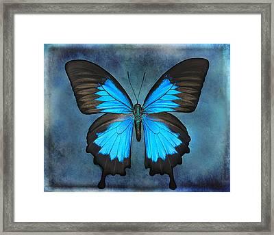 Teal Butterfly Framed Print by Lisbet Sjoberg