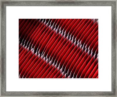 Tease Framed Print by Tom Druin