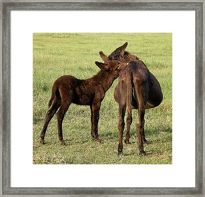 Tell Me A Secret Framed Print by Jan Amiss Photography
