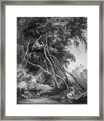 Temporary Tree Dwelling Framed Print by Douglas Barnett