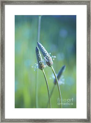 Tender Lovers Framed Print by Aimelle