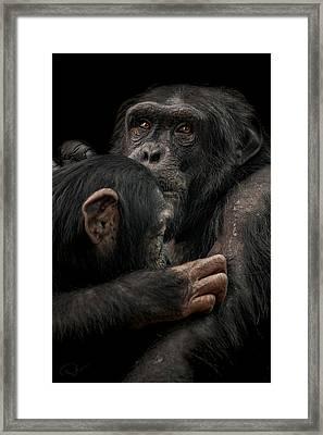 Tenderness Framed Print by Paul Neville