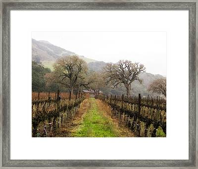 Tending The Grapes Framed Print by Lynn Andrews
