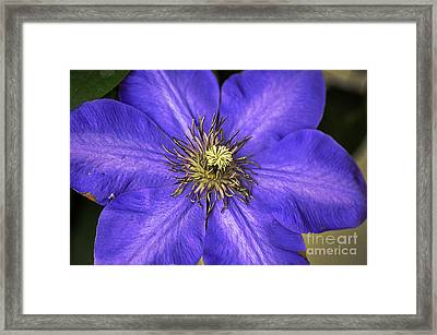 Tenticles Framed Print by Clayton Bruster