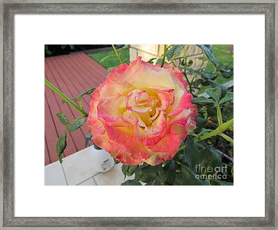 Tequila Sunrise Framed Print by Joyce Woodhouse
