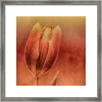 Terracotta Framed Print by Wim Lanclus